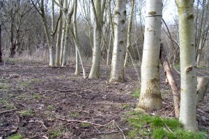 Hackney Marshes also have normal trees